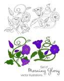 Wektorowa ilustracja ranek chwały ręka rysujący set ilustracji