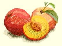 Wektorowa ilustracja rysunkowe owocowe brzoskwinie Zdjęcie Royalty Free