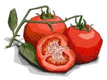 Wektorowa ilustracja rysunkowi jarzynowi pomidory Zdjęcie Royalty Free