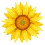 Wektorowa ilustracja słonecznik ilustracja wektor