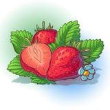 Wektorowa ilustracja truskawka z liśćmi royalty ilustracja