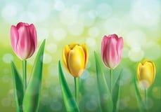 Wektorowa ilustracja wiosny tło ilustracji