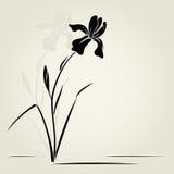 Wektorowy irysowy kwiat. Obraz Royalty Free