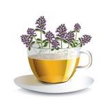 Wektorowa ilustracyjna aromatyczna herbata z macierzanką w przejrzystej filiżance Zdjęcia Royalty Free