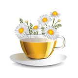 Wektorowa ilustracyjna chamomile herbata w przejrzystej filiżance Obrazy Stock