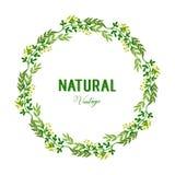 Wektorowa ilustracyjna elegancka zielona obfitolistna kwiat rama z naturalnymi roczników szablonami royalty ilustracja