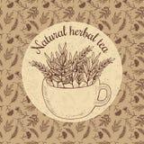 Wektorowa ilustracyjna nakreślenie karta - wykonuje ręcznie ziołowej herbaty Obraz Stock