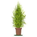 Wektorowa ilustracyjna roślina w garnku Obrazy Royalty Free