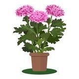 Wektorowa ilustracyjna roślina w garnku Fotografia Royalty Free