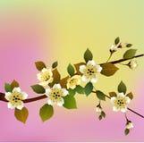Wektorowa ilustracyjna wiosna Wszystko budzi się up, kwitnie Sakura okwitnięcie pocztówka ilustracji