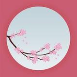 Wektorowa Japan Sakura wiśnia Zdjęcia Royalty Free