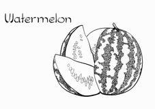 Wektorowa Jarska zdrowa ręka rysująca arbuza częstowania ilustracja Use dla baru, koktajl, ulotka, sztandar, sklep zdjęcia stock