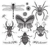 Wektorowa kolekcja Czarnej ręki Doodle Rysujący insekty ilustracja wektor