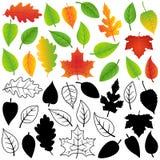 Wektorowa kolekcja jesień, sylwetki i konturów liście, ilustracja wektor