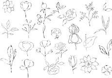 Wektorowa kolekcja ręki rysować rośliny Botaniczny set ilustracja wektor