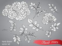 Wektorowa kolekcja ręki rysować krzak róże ilustracja wektor