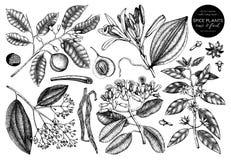 Wektorowa kolekcja ręki rysować pikantność Dekoracyjny set aromatyczne i tonika owoc rośliny kreśli Rocznik kuchni ilustracje ilustracji