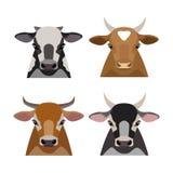 Wektorowa krowa, byk głowy set Płascy kreskówka stylu przedmioty Zdjęcie Royalty Free