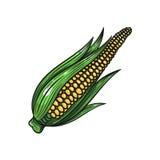 Wektorowa kukurydzana ilustracja na białym tle Zdjęcie Stock