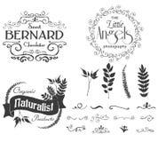 Wektorowa kwiecista logo etykietka z teksturą, oddzielnymi kwiecistymi gałąź i liście Obrazy Royalty Free