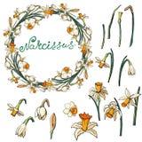 Wektorowa kwiecista rama z daffodils royalty ilustracja
