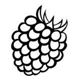 Wektorowa monochromatyczna ilustracja malinowy logo. Fotografia Royalty Free