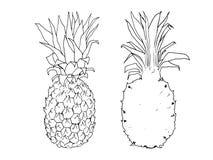 Wektorowa nakreślenie ilustracja ananas royalty ilustracja