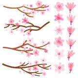 Wektorowa okwitnięcie wiśnia Japonia Sakura kwiat i gałąź ilustracji