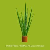 Wektorowa płaska ilustracja salowa homeplant wąż roślina w garnku Zdjęcie Royalty Free