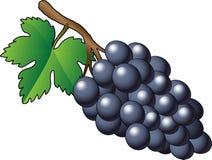 Wektorowa purpurowa wiązka winogrona - ilustracja Royalty Ilustracja