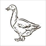 Wektorowa ręka rysująca Gęsia prosta nakreślenie ilustracja na białym tle royalty ilustracja