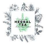 Wektorowa ręka rysująca herbaciana zielarska ilustracja zdjęcie royalty free