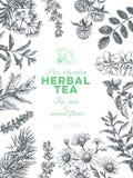 Wektorowa ręka rysująca herbaciana zielarska ilustracja obrazy royalty free