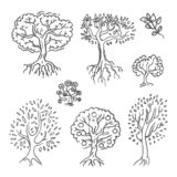 Wektorowa ręka rysujący nakreślenie drzewna ilustracja na białym tle ilustracji