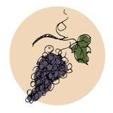Wektorowa ręka rysująca ilustracja wiązek czerwonych winogron Paryski temat Obraz Royalty Free