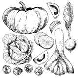 Wektorowa ręka rysujący set rolni warzywa Odosobniona bania, kapusta, Brussels flanca, leek, pomidor, cebula, rzodkiew ilustracja wektor