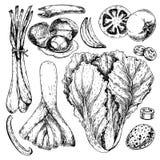 Wektorowa ręka rysujący set rolni warzywa Odosobniona chińska kapusta, leek, przepiórki jajko, pomidor, cebula Grawerująca sztuka ilustracji