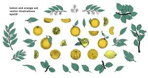 Wektorowa ręka rysujący set z liśćmi i pomarańczowymi owoc ptaka rocznik śliczny ilustracyjny ustalony Zdjęcie Stock