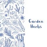 Wektorowa ręka rysujący ziele i pikantność tło z miejscem dla tekst ilustraci ilustracja wektor