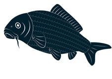 Wektorowa rysunkowa karp ryba ilustracja wektor