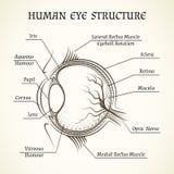 Wektorowa struktura ludzki oko Fotografia Stock