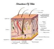 Wektorowa struktura skóra Zdjęcie Royalty Free