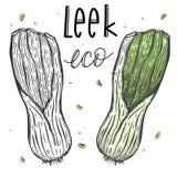 Wektorowa warzywa leek cebula w realistycznym nakreślenie stylu Zdrowy jedzenie, naturalny produkt, warzywa gospodarstwo rolne, w ilustracja wektor