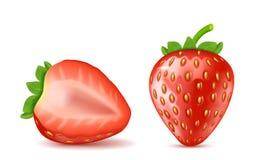 Wektorowe czerwone dojrzałe truskawki, lato jagodowa owoc royalty ilustracja
