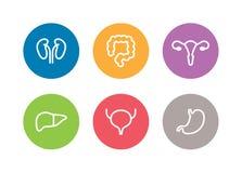 Wektorowe ludzkie wewnętrznych organów ikony Wątróbka, cynaderki, macica, pęcherzowy, żołądek i dwukropek Obraz Stock