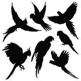 Wektorowe papugi, Amazon dżungli ptaków sylwetki odizolowywać na bielu Zdjęcia Stock