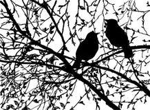 Wektorowe sylwetki ptaki przy gałęziastym drzewem Ilustracji
