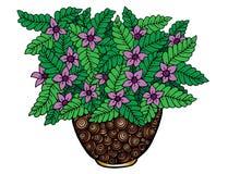 Wektorowego doodle kwiecisty obrazkowy Bukiet kwiaty w wazie, ręka rysunek ilustracji