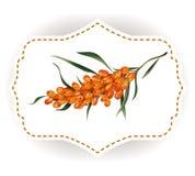 Wektorowego majcheru buckhorn naturalna jagoda photorealistic Zdjęcia Stock