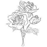 Wektorowego nakreślenia czarny i biały róża Fotografia Royalty Free